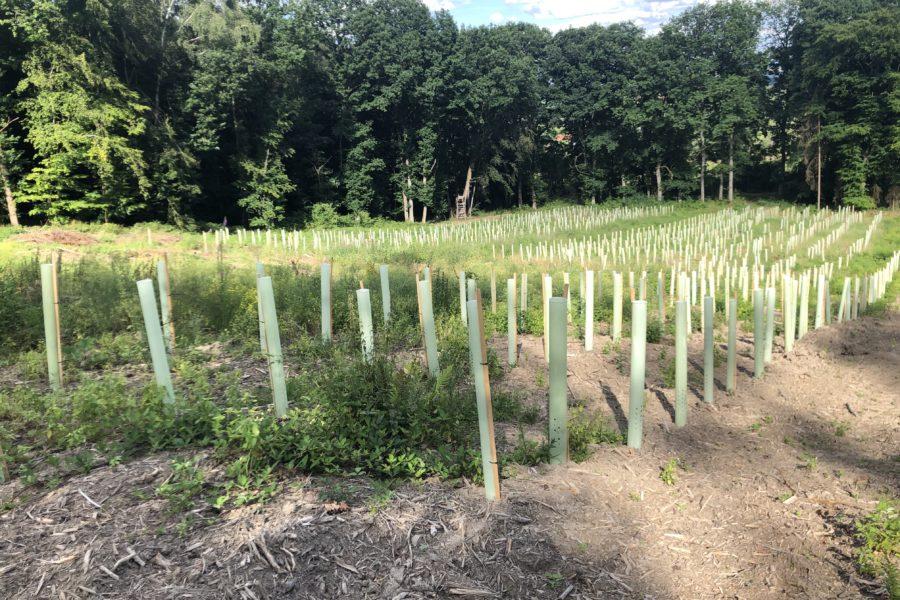 150 Bäume